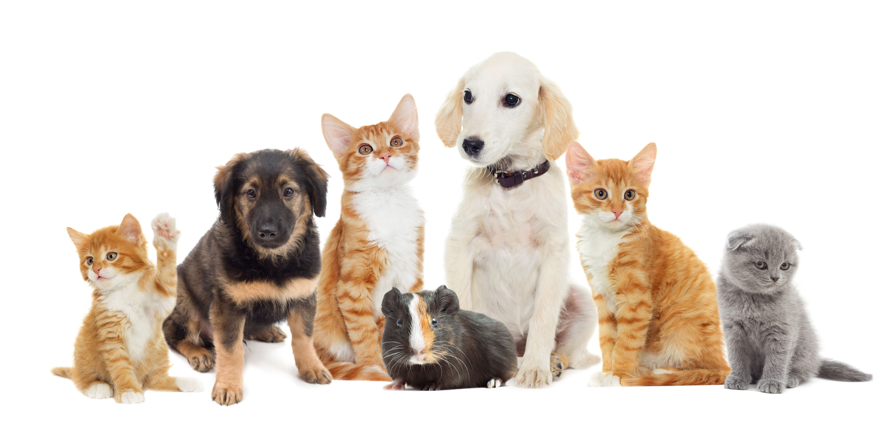 pet-friendly-cleaning-service-nashville-tn